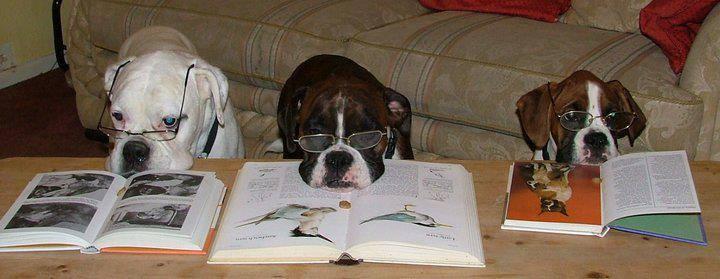 Educazione del cane