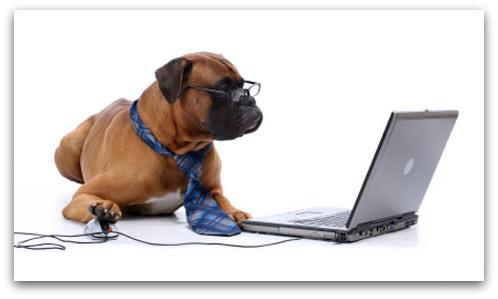 dog-computer1